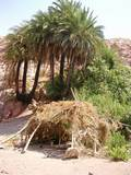 """סוכת ציידים באחד הערוצים של ואדי ע´וויר, הסוכה ממוקמת ליד """"ברז"""" מים טבעי שיוצא מן הסלע"""