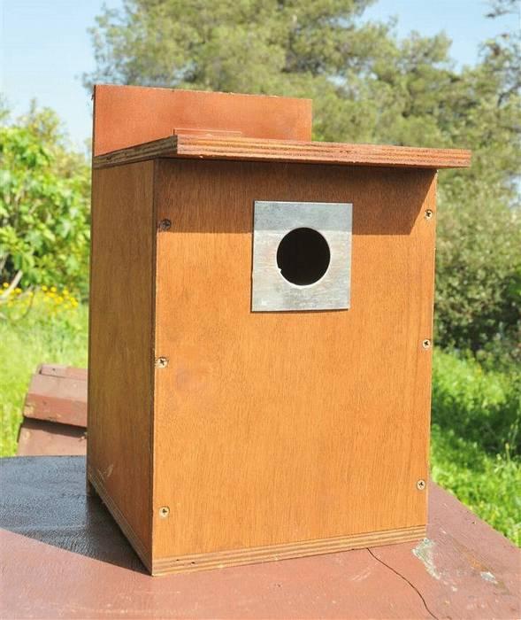 תיבת קינון לירגזי מצוי/ דרור בית ממוגנת מפני מינים פולשים