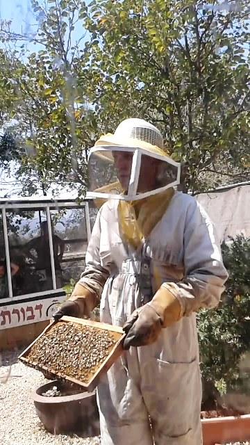 פסטיבל הדבש