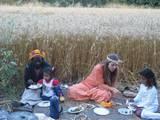 סעודה חגיגית בשדה, שבועות