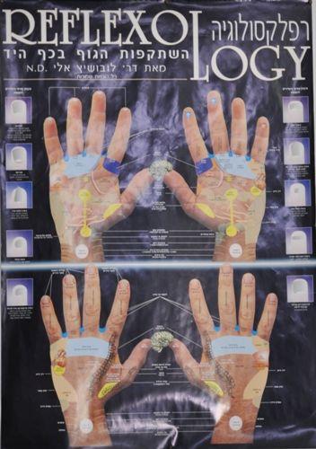 מפת רפלקסולוגיה יד - לובושיץ