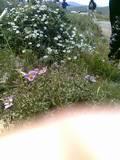 פריחה בשומרון ליד איתמר