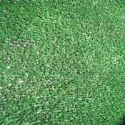 """דשא סינטטי לגינה לבד 10 מ""""מ."""