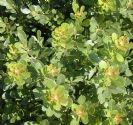 אוג חרוק 10 ליטר