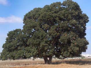 משתלת עצי נוי - משתלת בוטני