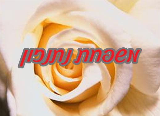 שלט צבעוני ממתכת לדלת, דגם ורד לבן