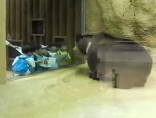 דוב רוקד בגן החיות
