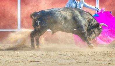 מירוץ הפרים בפמפלונה ספרד