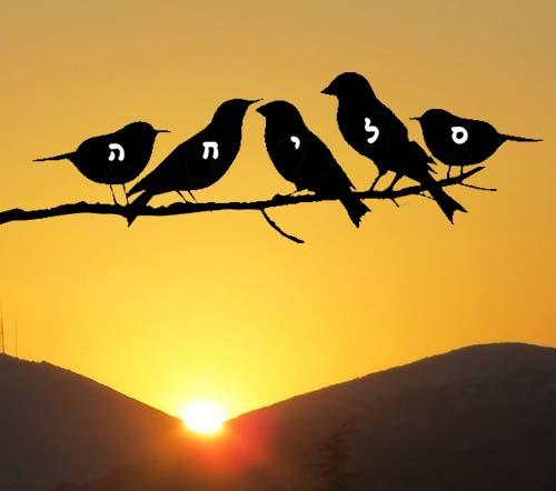 סליחה ציפורים בשקיעה