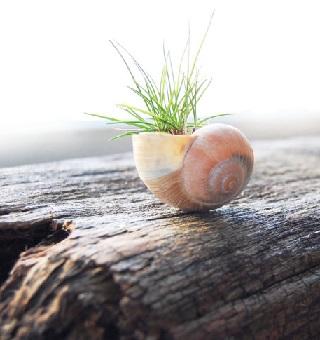 קונכיה משמשת כבית לצמח