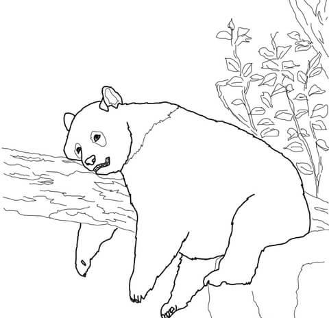 פנדה נחה על ענף
