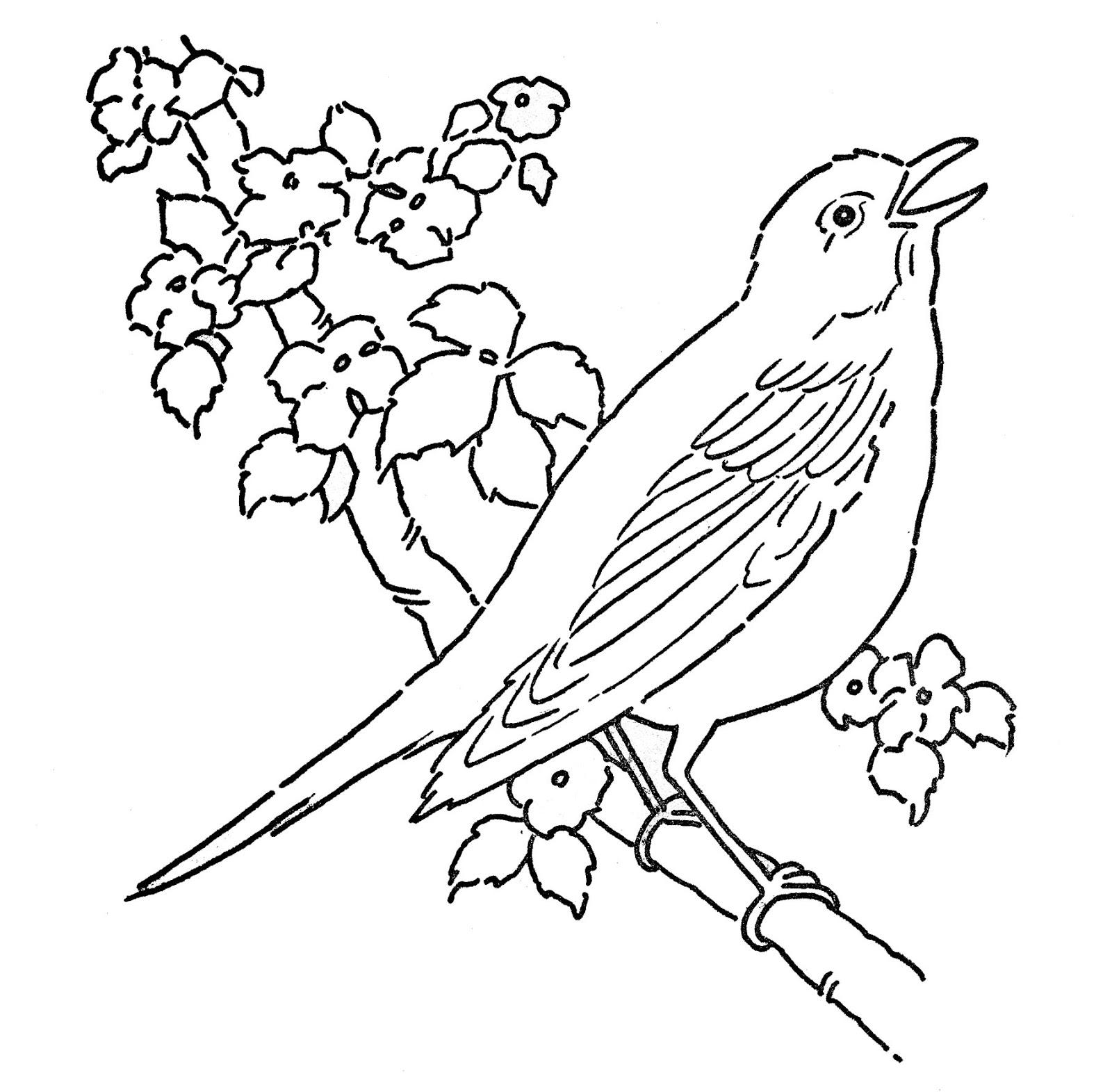 דף צביעה ציפור שרה