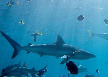 קייטנה עם כרישים