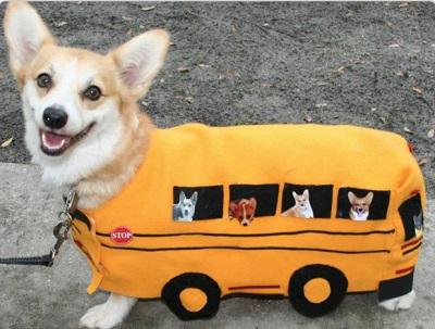 תחפושת כלב אוטובוס