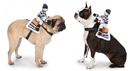 תחפושת כלב מרכיב איש על הגב