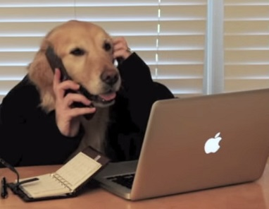 סרטון מצחיק- כלב איש עסקים