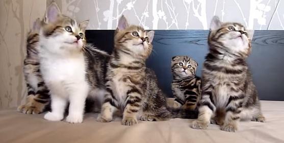 חתולים רוקדים