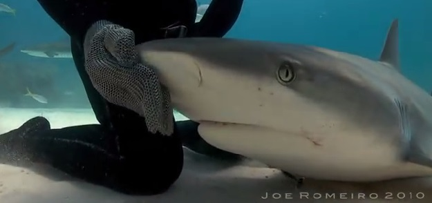 צוללן עם כריש