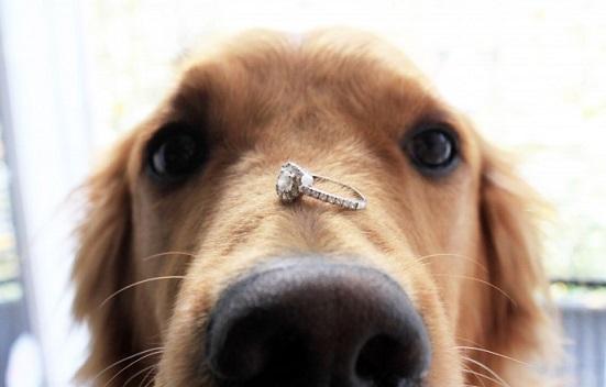 הצעת נישואין עם כלב