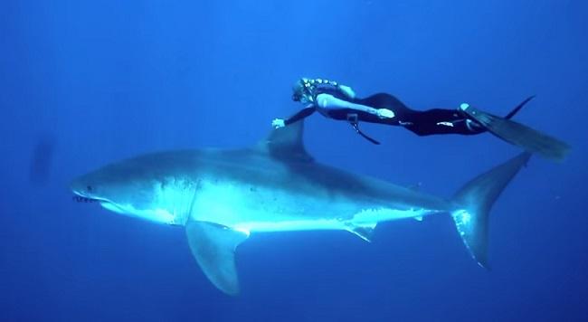 צלילה עם כריש