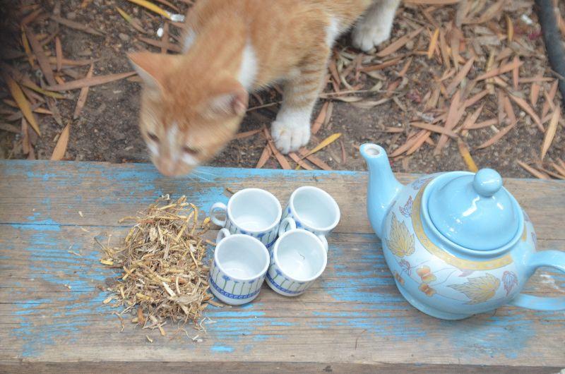 גלדן, אלומית , אגרופירון סמרני, חוף, ליקוט, תה