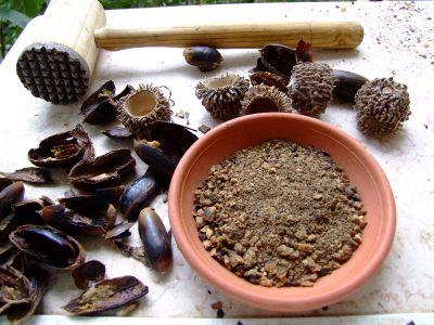 אלון התבור Quercus ithaburensis
