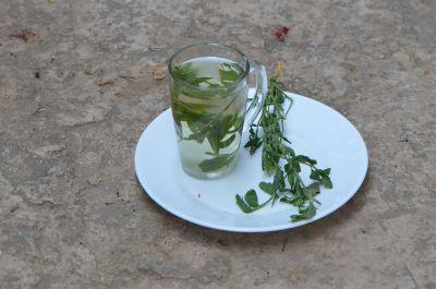 ארכובית שבטבטית, ליקוט, צמחי בר למאכל