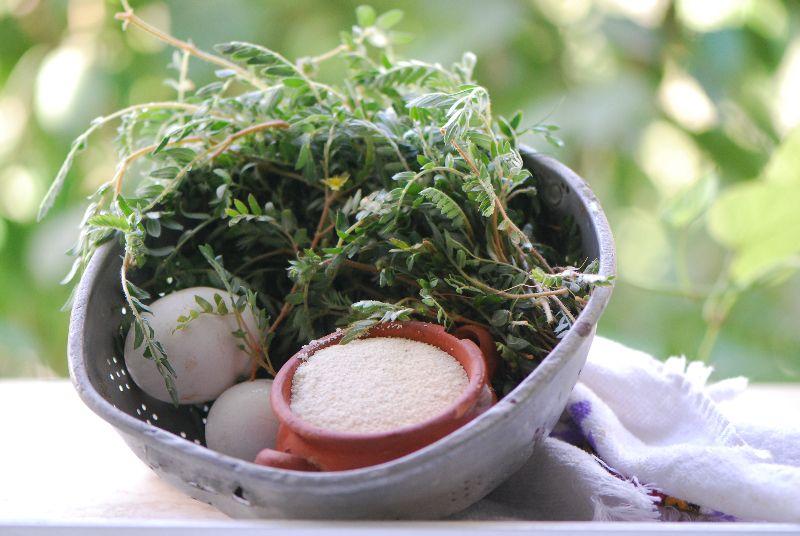 קוטב מצוי, ליקוט צמחי בר, רחלי עינב