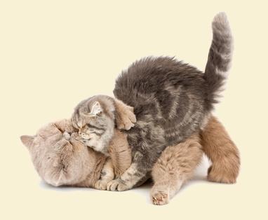 הפגשה בין חתולים