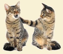 איך מוסיפים חתול חדש לבית