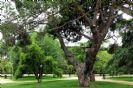 פארק דל אואסטה - Parque del Oeste