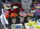 תמונות משוק הפרחים