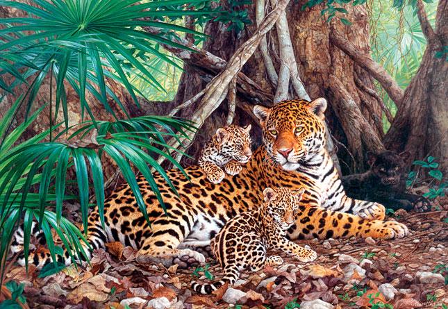 פאזל 3000 חלקים - יגוארים בתוך הג'ונגל