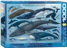 פאזל 1000 חלקים - לוויתנים ודולפינים