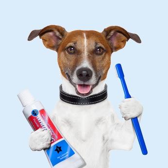 ניקוי שיניים לכלב