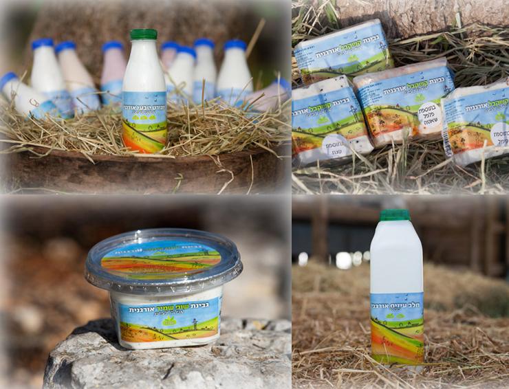 מיתוג אריזות למוצרי חלב