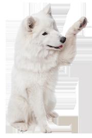 חיסונים לכלבים , חיסון לכלבים