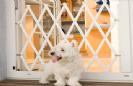 שער אקורדיון לכלבים