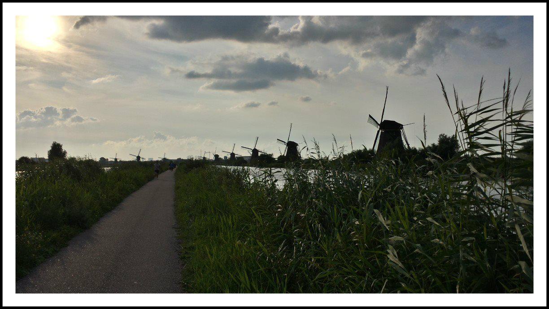 טחנות רוח בהולנד נוף במסע האופניים