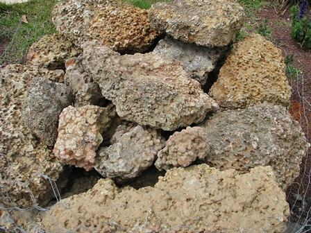 סלע נטיפים