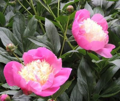 פרחים וברכות