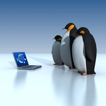 לוויינים ופינגווינים