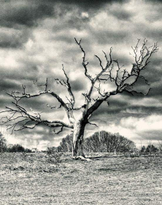 דלת העץ הבודד
