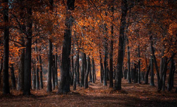 יער השחור