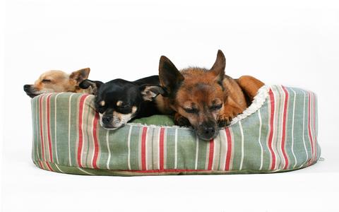 מיטה יבשה וחמה לכלב