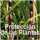 GBM - Proteccion de Plantas