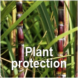 GBM - Plant Protection in Cuba