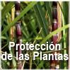 GBM - Protección de las Plantas