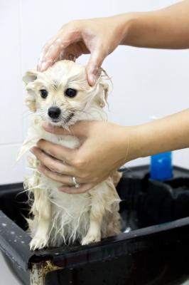רחיצת כלבים ניידת