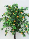 """תפוז ננסי גובה 130 ס""""מ"""